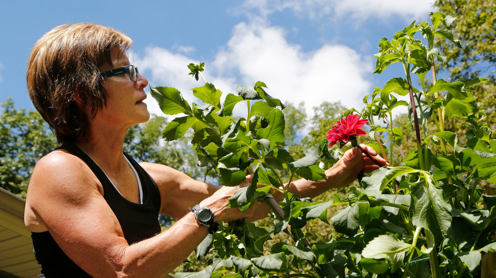 Meet Naomi Prince, the Lafayette gardener carrying the torch of the winning dahlia legacy