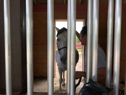 LEDE Horse at Naples Therapeutic Riding Center