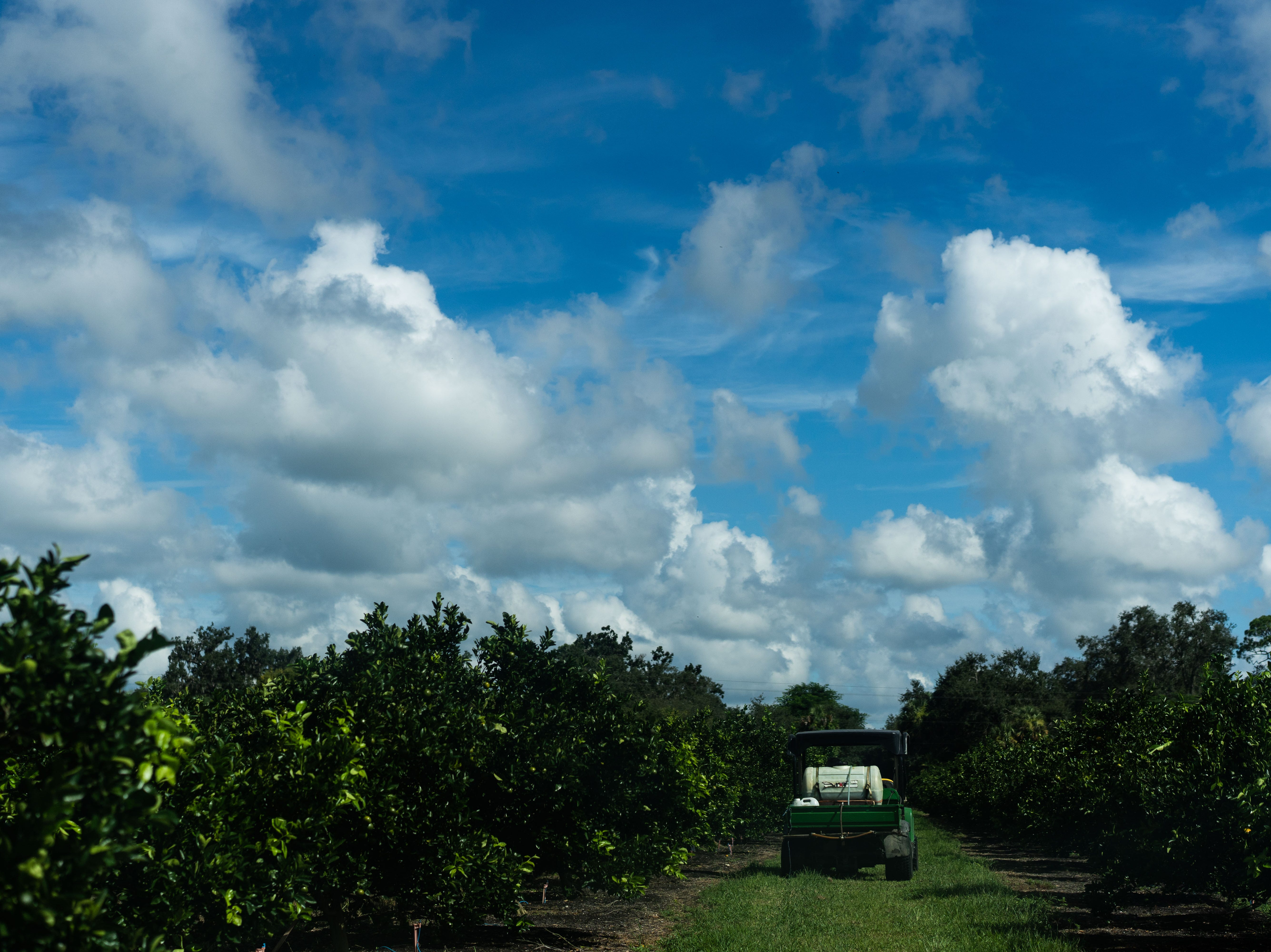 Martin Mason, the owner of Tropical Oaks Farm in LaBelle, Fla., sprays  his citrus trees, trying to protect them from sunburns and pests.