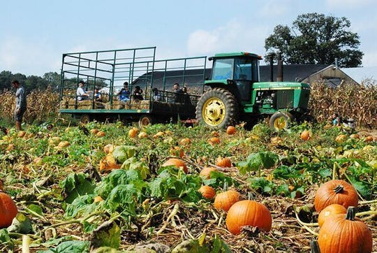 Harvest moon hayrides will be held at Alstede Farms in Chester.