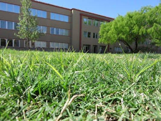 Nutsedge In Nm Lawn Leslie Beck Pic