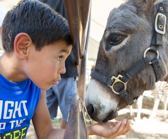 "Xavier Ludington, 10, of Las Cruces, feeds a donkey on Sunday, Oct. 1, 2017, during the Southern New Mexico State Fair and Rodeo. While hand feeding the donkey Ludington repeatedly asked it, ""Where is Shrek?"""