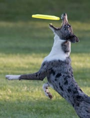 Roadie snatches the disc.