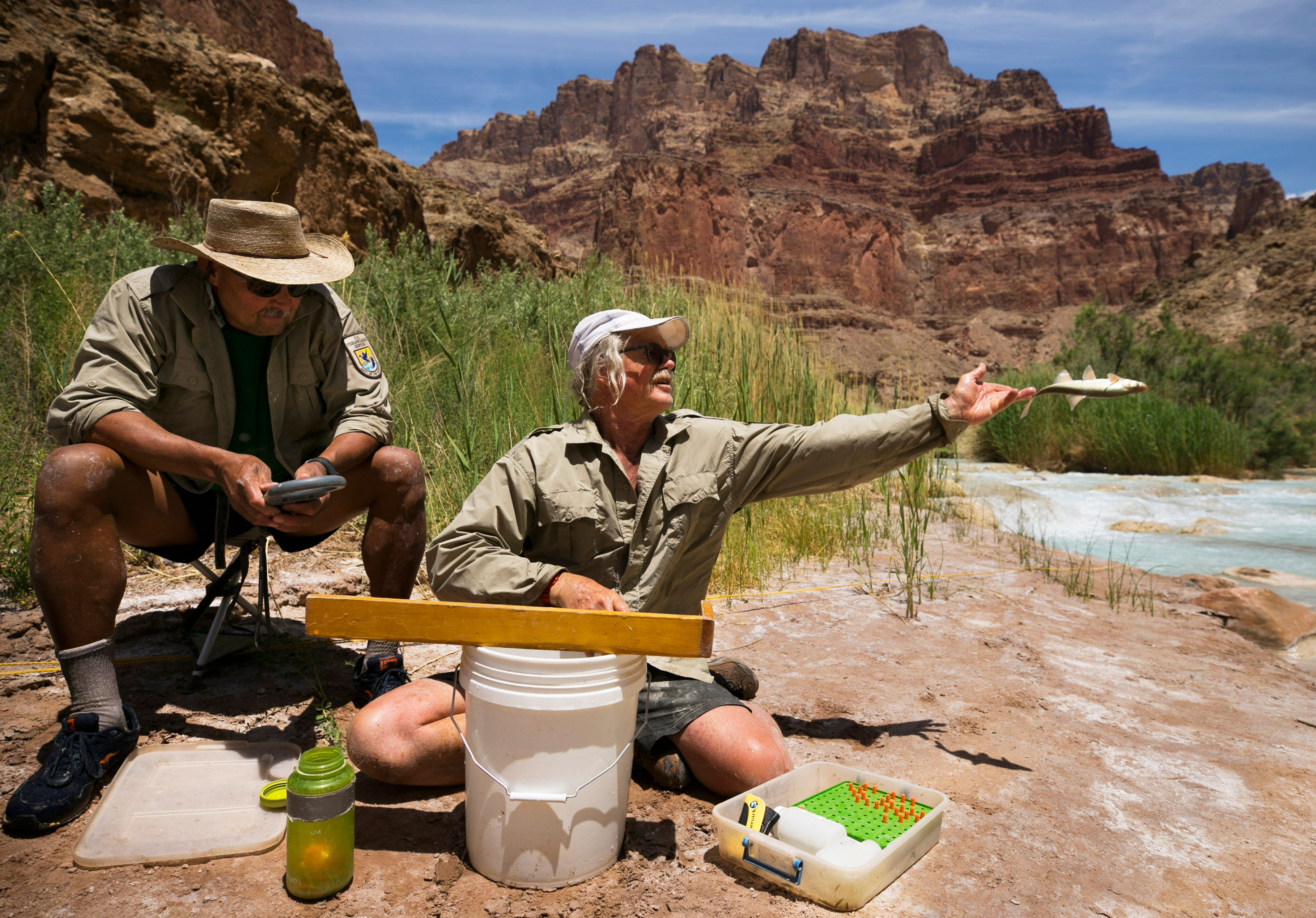 Randy Van Haverbeke, a senior fish biologist with U.S. Fish and Wildlife, tosses a humpback chub back into the waters of the Little Colorado River as Rick Deshler, a biological technician with U.S. Fish and Wildlife, looks on near the confluence of the Colorado River in Grand Canyon National Park on May 20, 2018.
