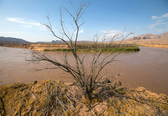 A dead tamarisk is seen atop silt banks towering more than 50 feet above the Colorado River near Pearce Ferry, marking the end of the Grand Canyon, in Lake Mead National Recreation Area.