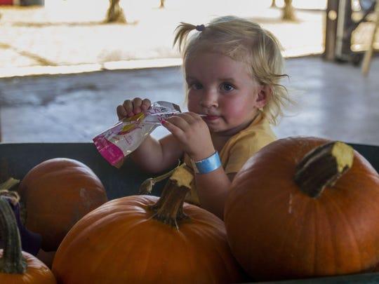 10 / 1-11 / 4: Vertichcio Farms Corn Maze & Fall Festival