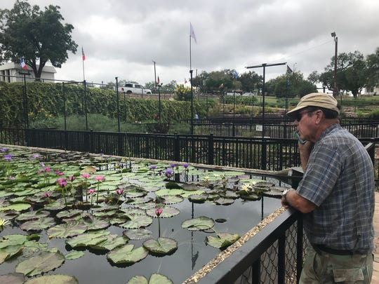 Ken Landon surveys the a pond at the International Waterlily Collection in San Angelo before Lilyfest, slated for this weekend.