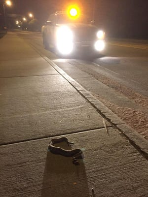 A rattlesnake was spotted in Chamberlain on Wednesday. Authorities are warning residents to keep an eye out for the creatures.