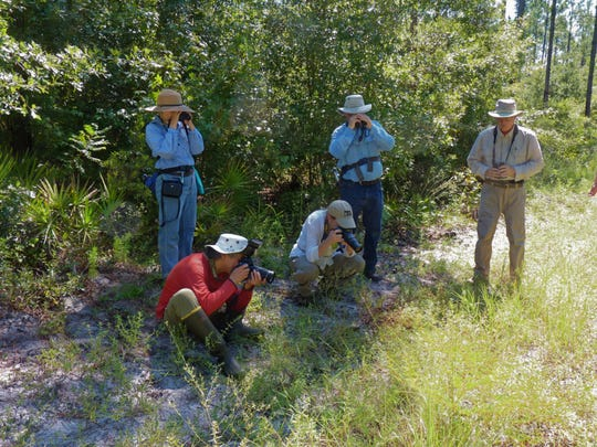 Hairstreak Chapter members enjoy observing and photographing butterflies on field trips to local natural areas.
