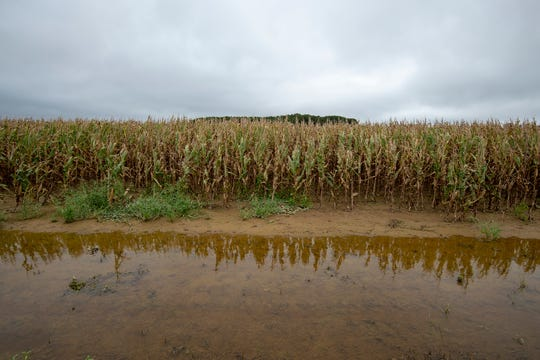 View of standing water on a corn field on Cods Road in Milford.
