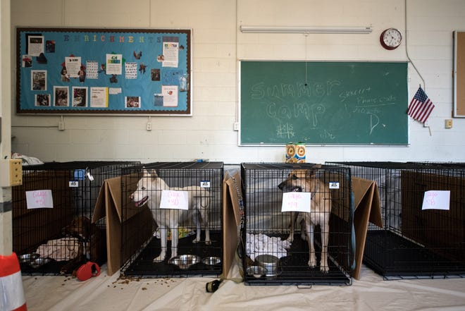 People and pets evacuate ahead of the forecasted landfall of Hurricane Florence by seeking shelter at Burgaw Middle School in Burgaw, N.C. on Sept. 12, 2018.