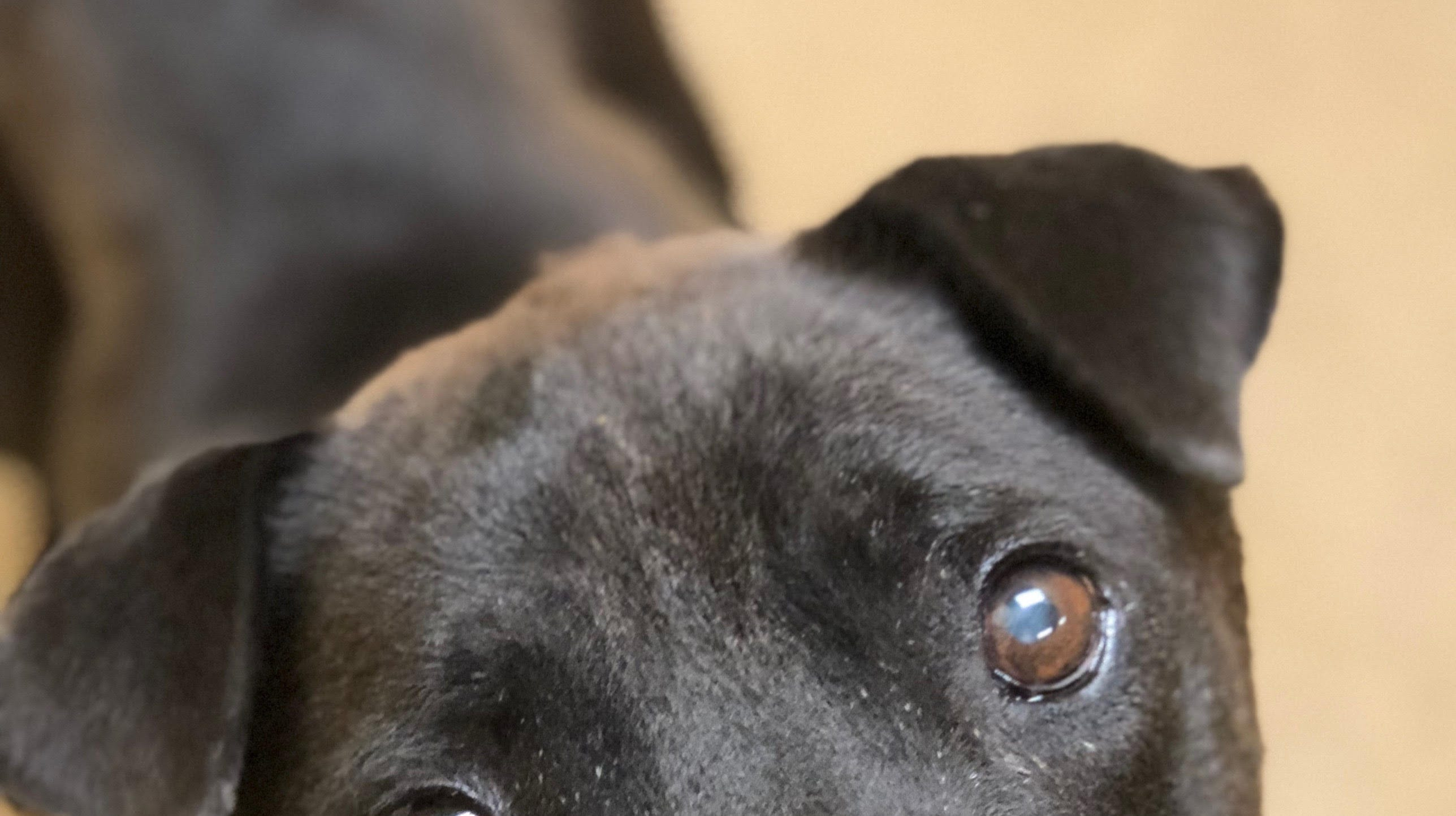 Hurricane Florence sends dogs in need of homes to Monmouth County SPCA