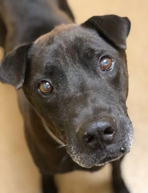 Jason is one of the dogs arriving at Monmouth SPCA from the Carolinas and in need of a good home.