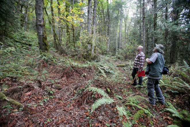 Camp Indianola director Darin Gemmer, top, and John O'Leary, water resource program manager for the Suquamish Tribe, stand near a spot of dead ferns on a trail. Plant experts are trying to understand why sword ferns are dying off in North Kitsap and other parts of Puget Sound.