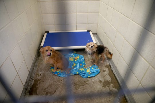 Twenty six dogs are at the Kitsap Humane Society after being rescued from a home in Chico.