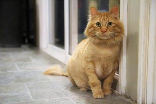 """Buttercup, who is up for adoption at Furry Friends Refuge, is described as a """"big, happy ball of floof."""""""