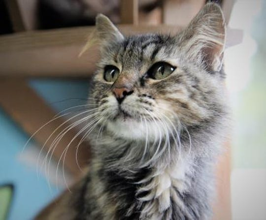 Garbo is up for adoption at Furry Friends Refuge. Garbo is named after famous actress Greta Garbo.