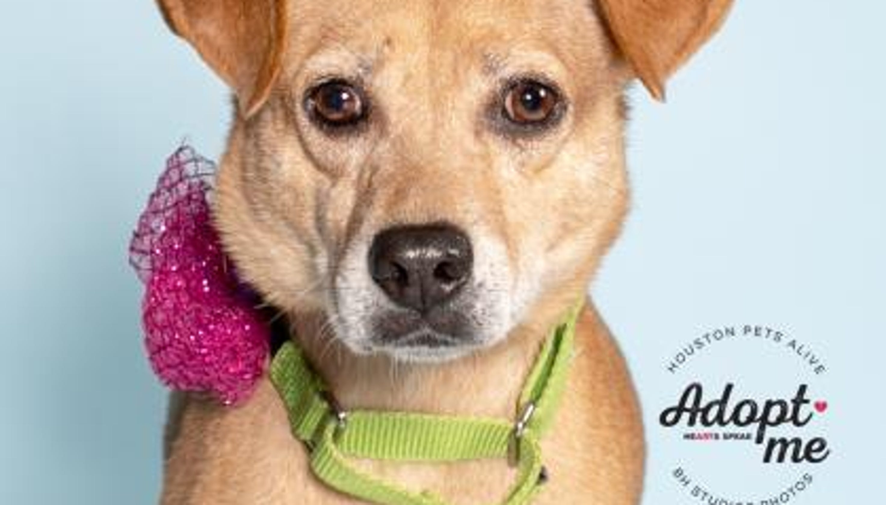 Hurricane Florence: Local shelters hold pet adoption