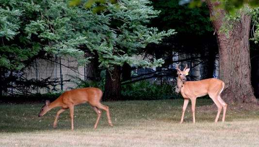 073018 Dy Cwd Deer0188