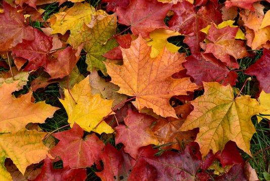 Autumn Multicolored Fallen Leaves