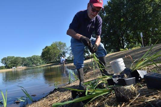 Dca 0720 Little Lake Plantings 1