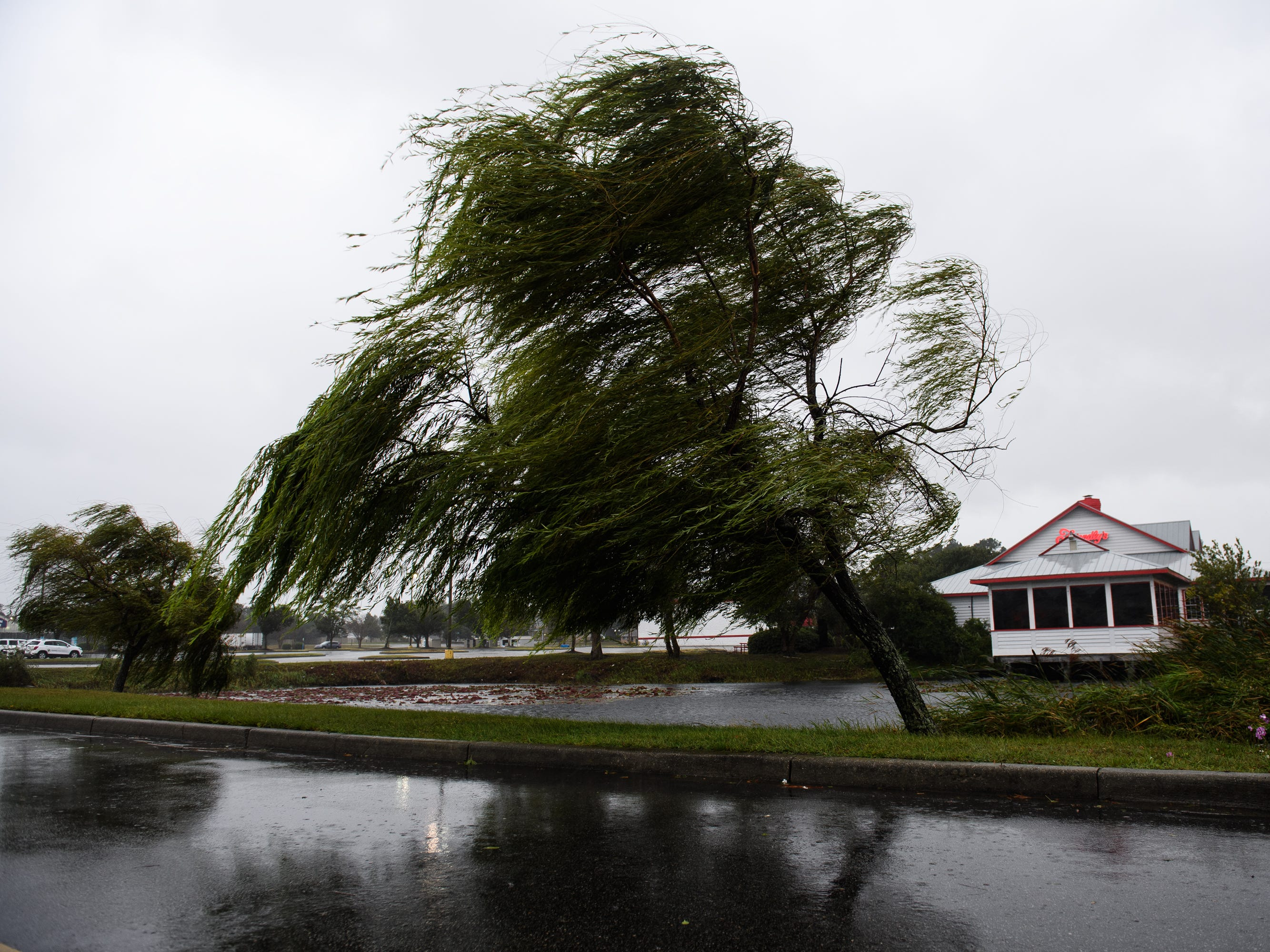 Heavy winds that are starting to pick up in North Myrtle Beach begin to push trees on Friday, Sept. 14, 2018.