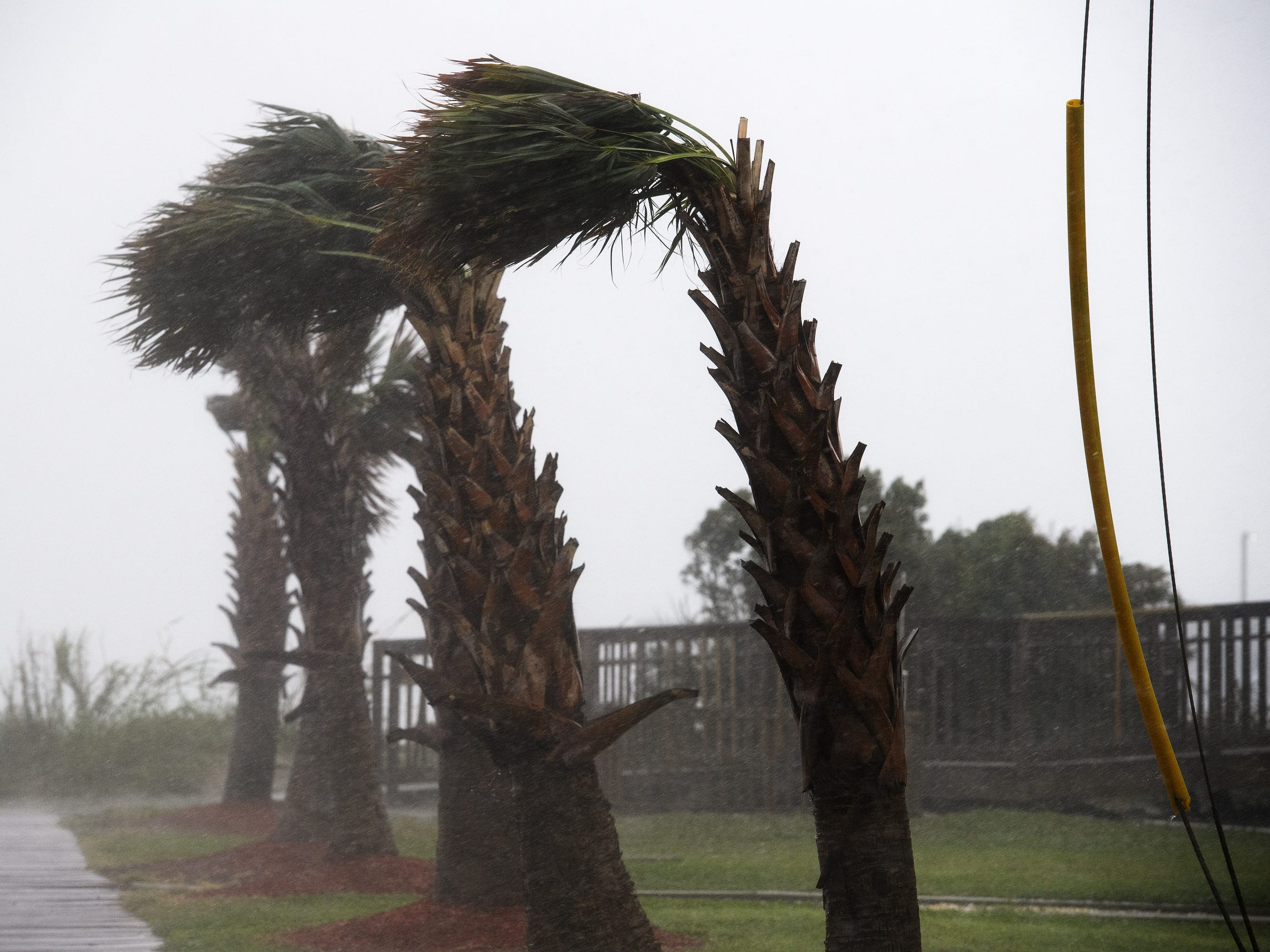 Trees sway from heavy wind caused by Hurricane Florence in North Myrtle Beach on Friday, Sept. 14, 2018.