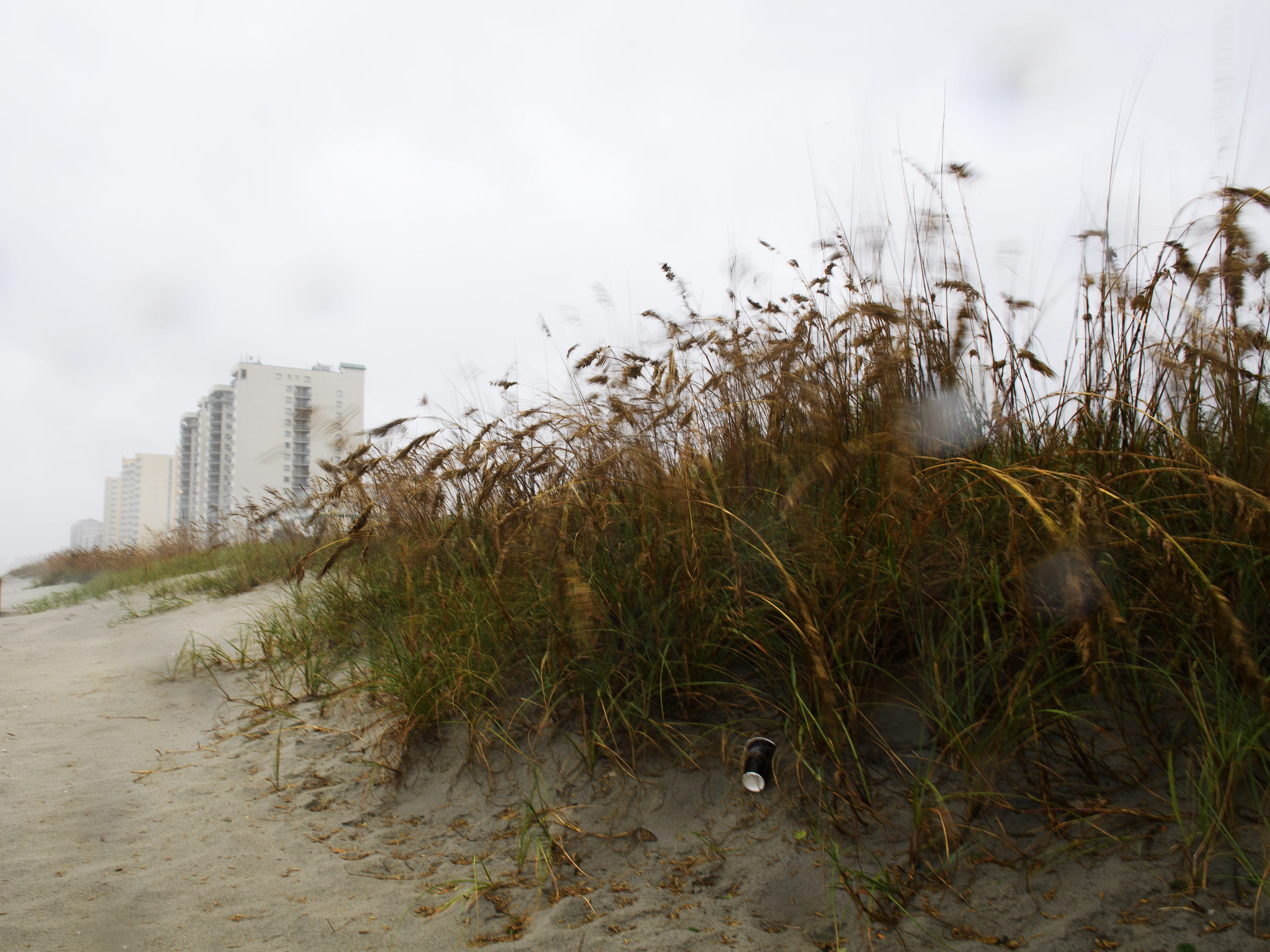 Sea oats sway in the wind as conditions begin to worsen as Hurricane Florence inches towards North Myrtle Beach in South Carolina on Friday, Sept. 14, 2018.