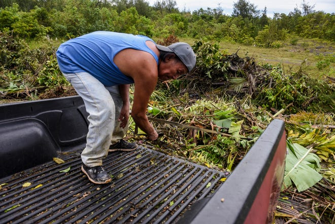 Yigo resident Vic dela Cruz sweeps away the last remnants of green waste from his pickup at a designated drop-off point near the V.S.A. Benavente Middle School in Dededo on Friday, Sept. 14, 2018. The temporary site is just one of many, designated by village mayors, to be a collection site to allow residents to dispose of green waste material created by the passage of Typhoon Mangkhut. The sites, which will only accept green waste, will be open daily from 8:00 a.m. - 5:00 p.m., until Sept. 23, according to Guam Homeland Security.
