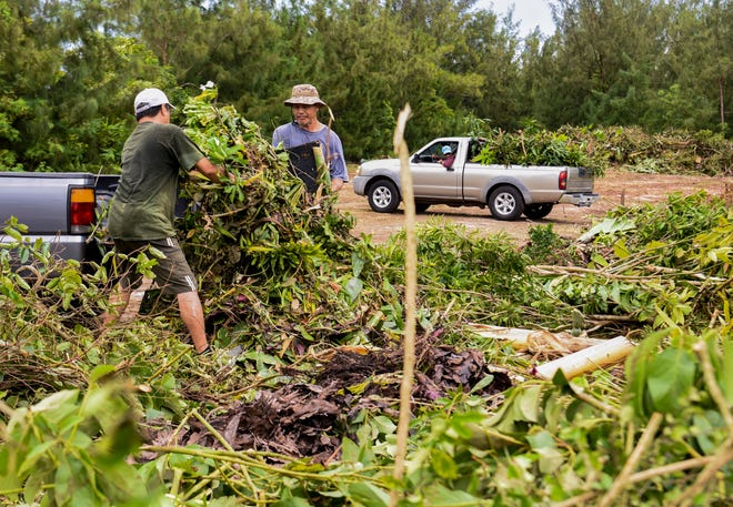 Aflague brothers unload green waste, they gathered from their parents home, to a designated drop-off point near the V.S.A. Benavente Middle School in Dededo on Friday, Sept. 14, 2018. The temporary site is just one of many, designated by village mayors, to be a collection site to allow residents to dispose of green waste material created by the passage of Typhoon Mangkhut. The sites, which will only accept green waste, will be open daily from 8:00 a.m. - 5:00 p.m., until Sept. 23, according to Guam Homeland Security.