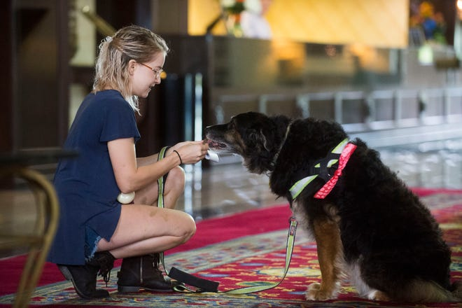 A hurricane evacuee who preferred not to be named opens a treat for her dog Hogan at Hotel Knoxville Friday, Sept. 14, 2018. PetSafe offered pet products and professional guidance on pet handling to Hurricane Florence evacuees.