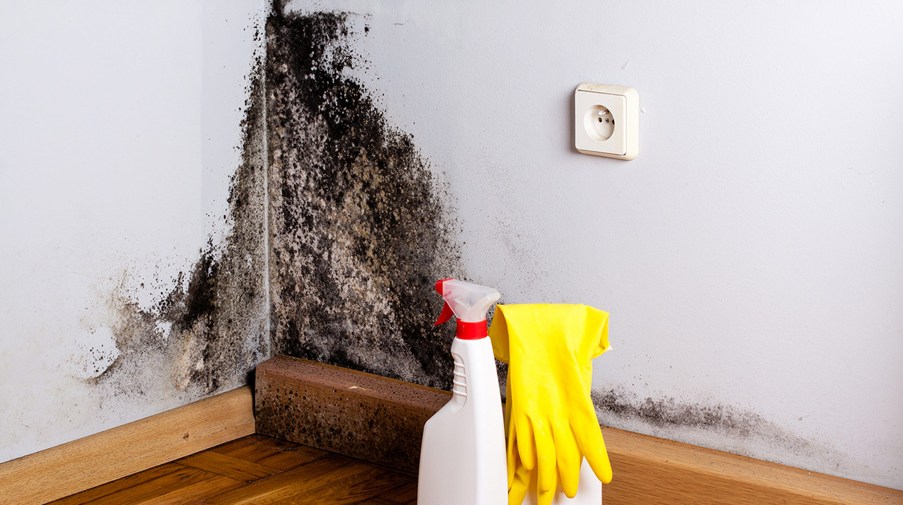 Why Mold Is Most Dangerous For Those With Asthma Allergies