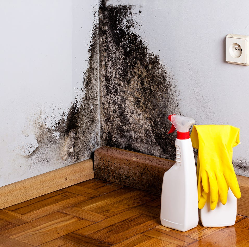 How to Get Rid of Mold Once and For All