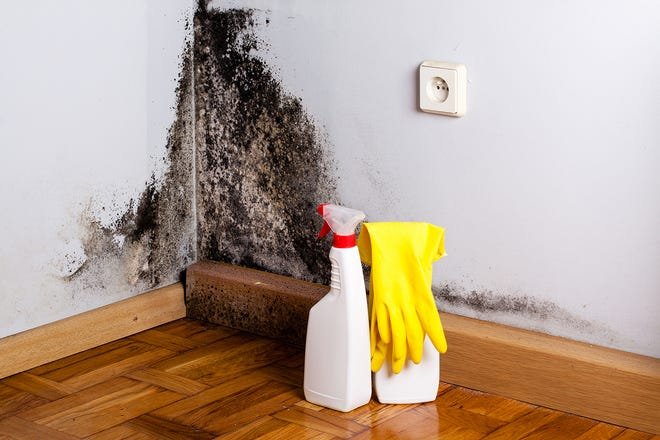 Black mold is a serious health risk.