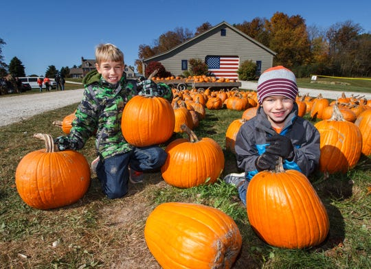 Nolan (left) and Cameron Walsh search for the perfect pumpkin at Homestead Animal Farm in Hartland in 2015. The farm is now open for the 2018 season.