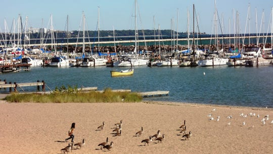 Birds congregate on South Shore Park beach just south of the South Shore Yacht Club.