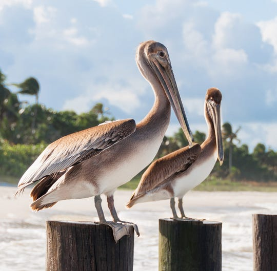 Pelican Bay stands among the leaders in sustainability for Naples and the surrounding area