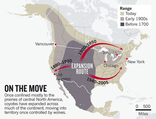 Coyote population movement map showing disbursement throughout the United States.