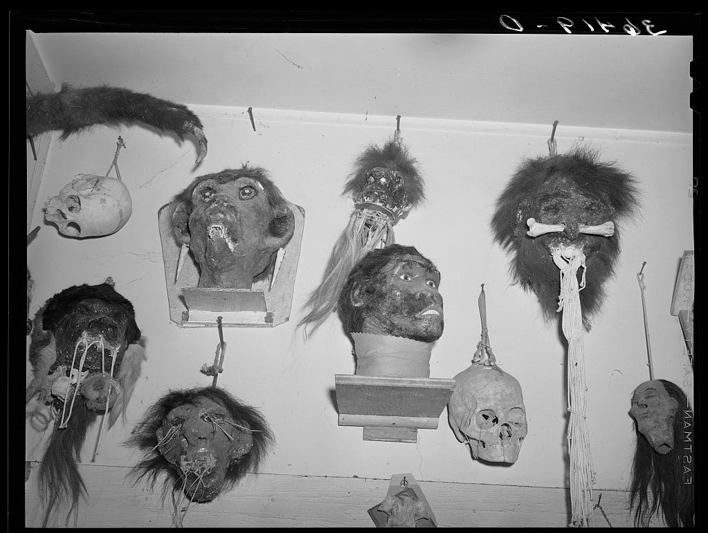 Shrunken heads fashioned by Homer Tate (May 1940).