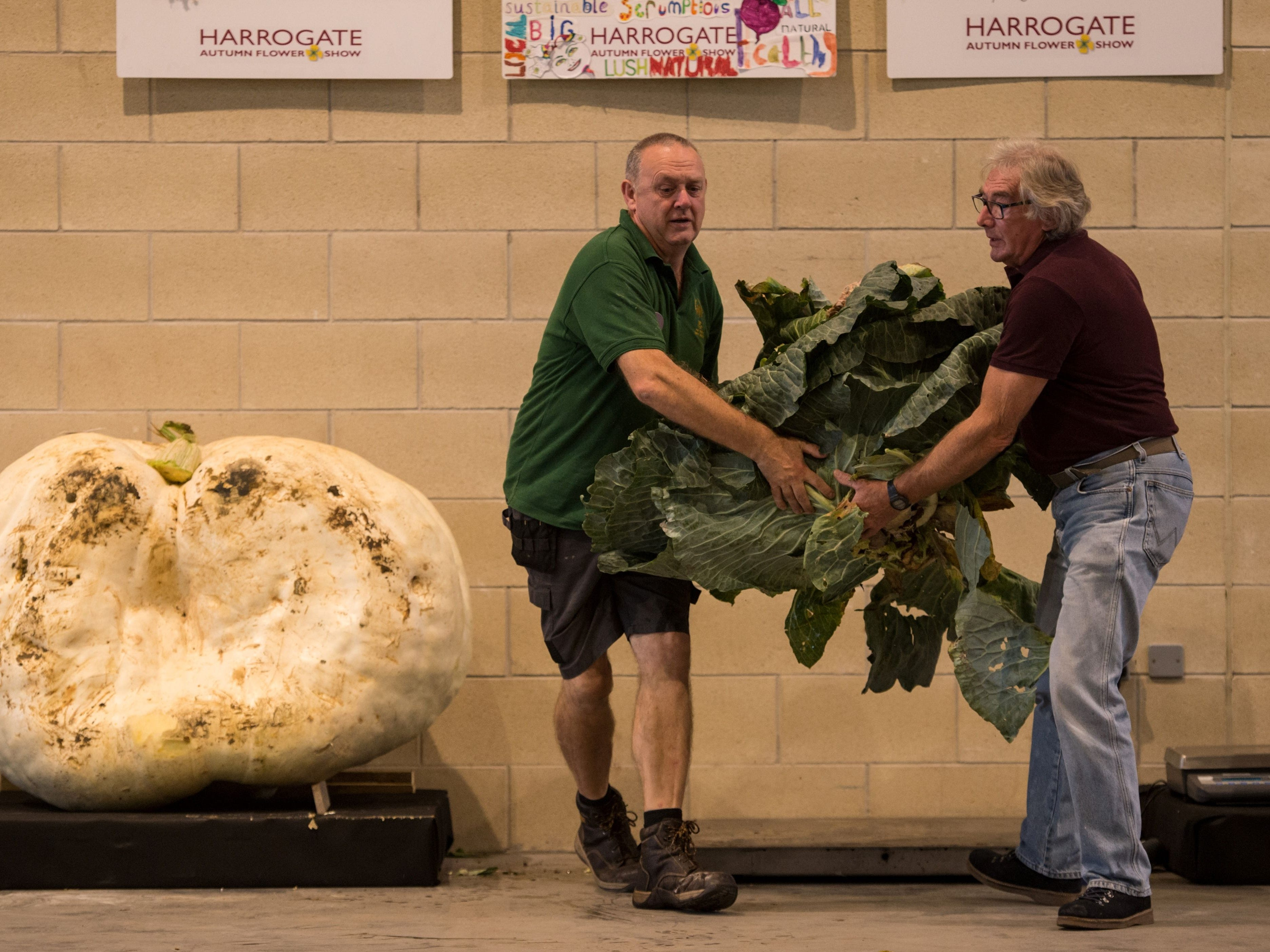 Show staff weigh cabbages and pumpkins.