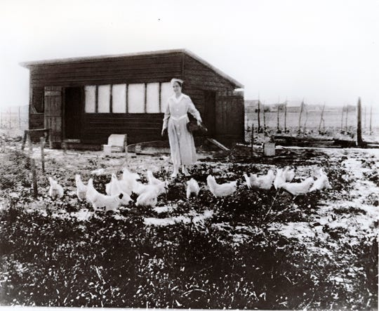 The new Perdue cartoon chicken is named Pearl after company founder Arthur Perdue's wife.