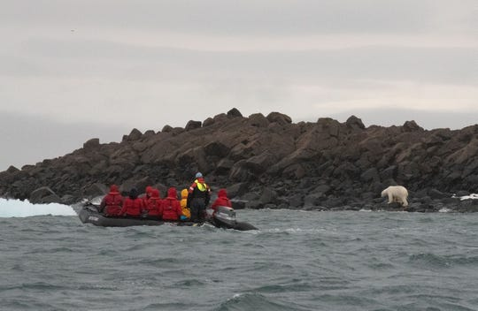 A Zodiac tour of the coastline of Apollonia Island brings a sighting of several polar bears. Polar bears are widespread across Franz Josef Land.