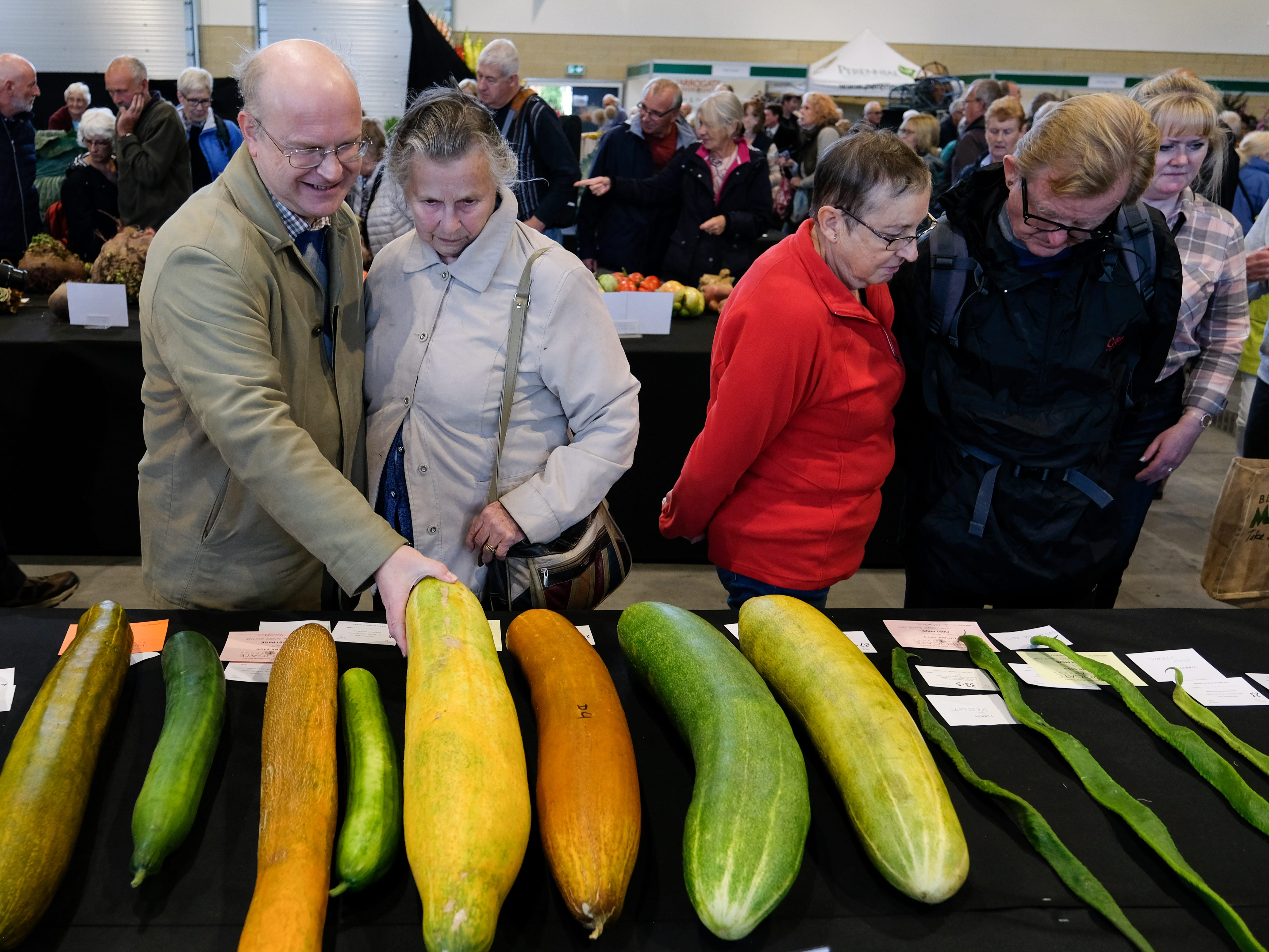 Giant cucumbers in the giant vegetable competition.