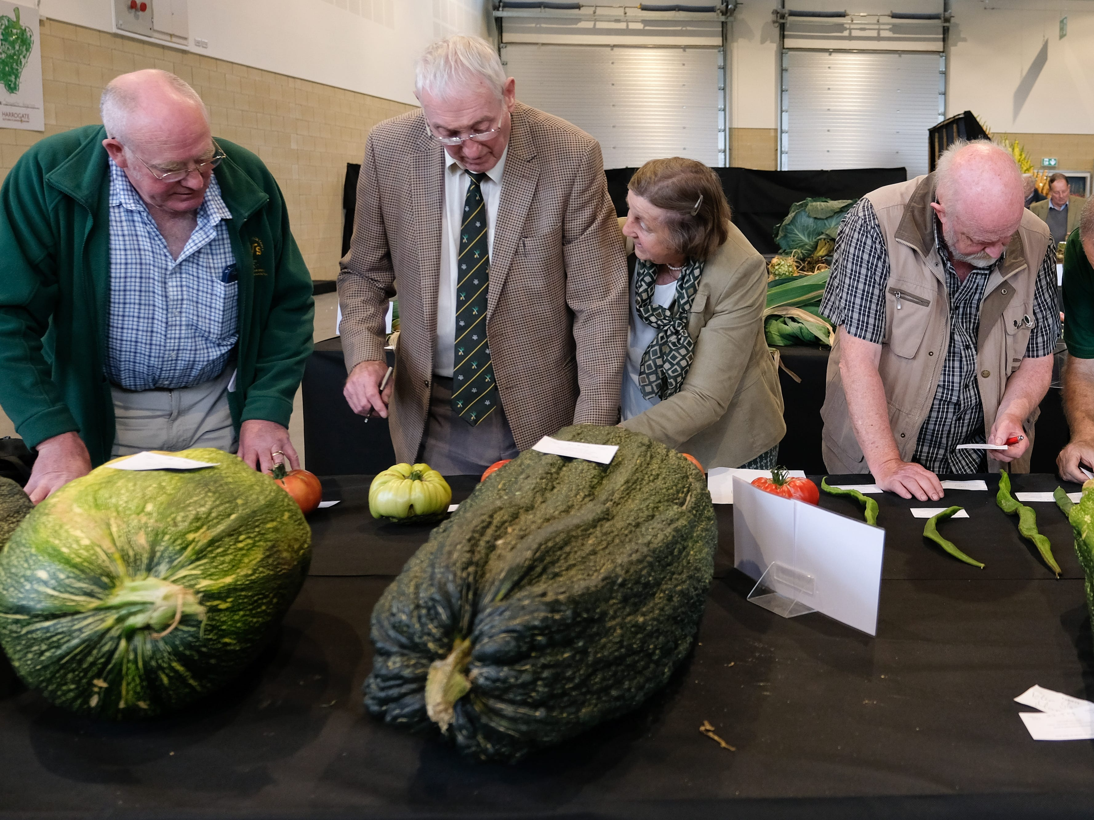Judging takes place in the marrow category.