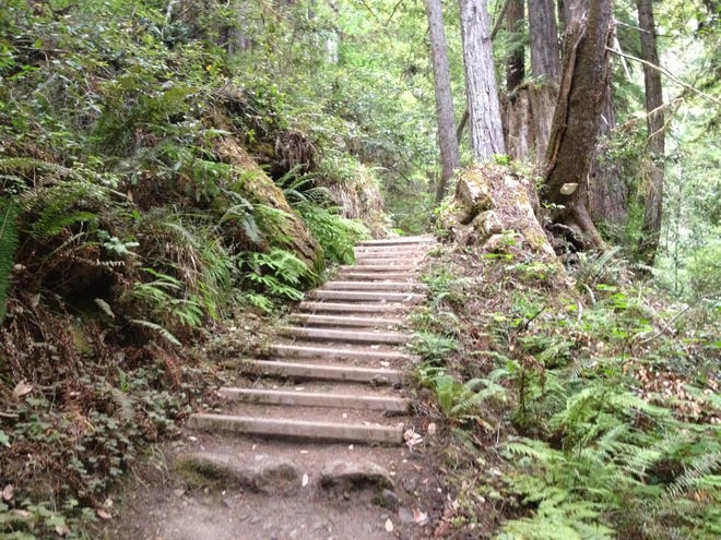 A path leads to redwood trees in Mendocino, California. Nature is one of the best places to contemplate your faith.