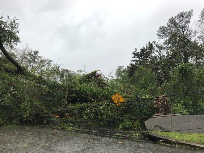 The corner of Borden Avenue and Carlton Avenue in the Brookwood neighborhood of Wilmington, North Carolina. (Luc Travers, Saturday, Sept. 15, 2018)