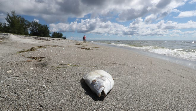 A few fish can still be found washed up on the very quiet shores of Captiva. Gov. Rick Scott has proposed a red tide research center to help combat the algal blooms.