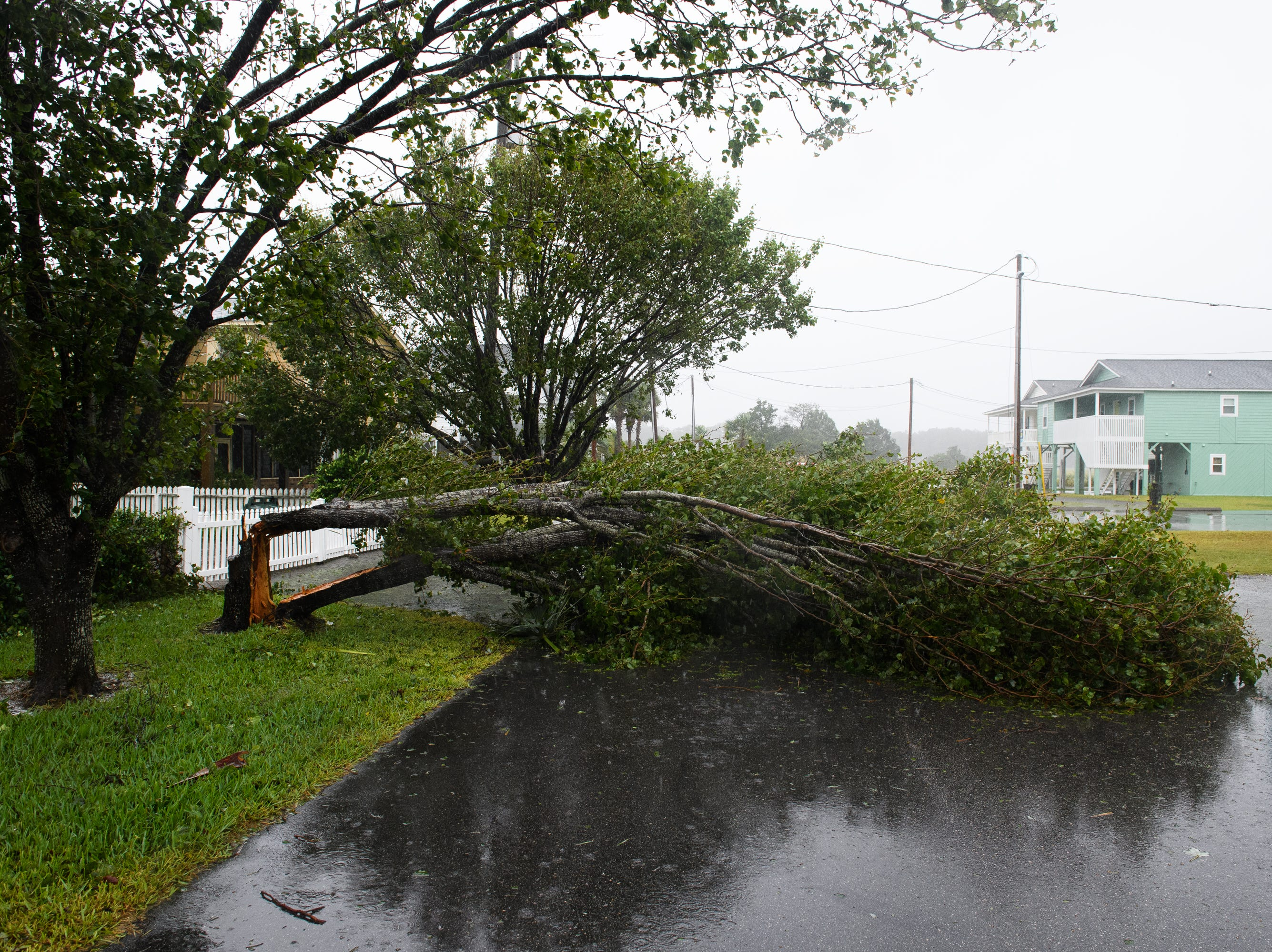 A down tree blocks a residential street in the Cherry Grove neighborhood of North Myrtle Beach on Saturday, Sept. 15, 2018.