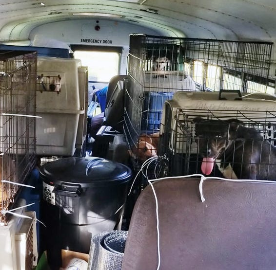 Tennessee truck driver helps 64 dogs and cats escape Hurricane Florence on a school bus