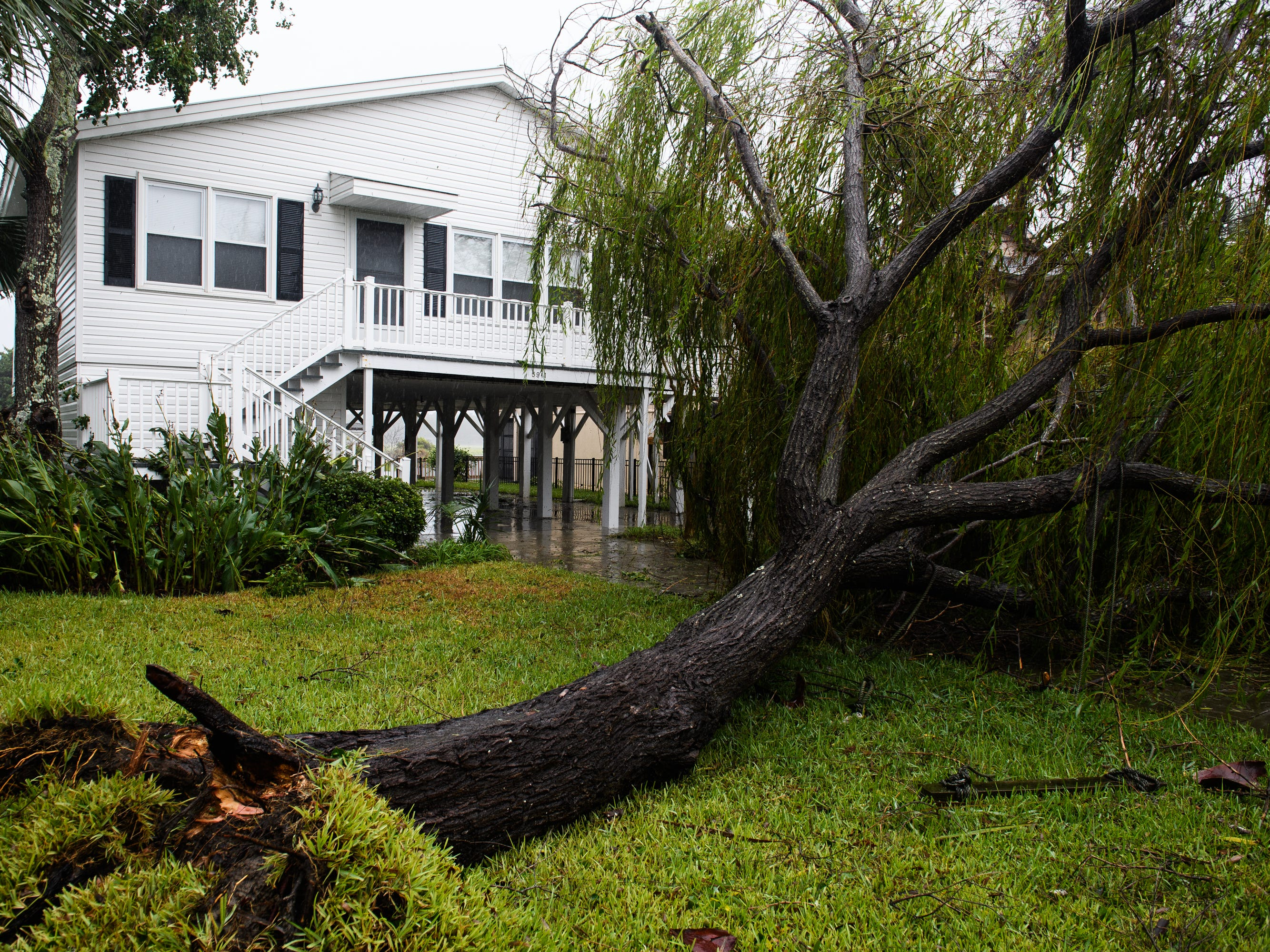 A down tree sits in front of a home in North Myrtle Beach on Saturday, Sept. 15, 2018.